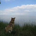 Собака, любующаяся заливом