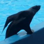 Ейский дельфинарий