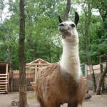 Ейский зоопарк