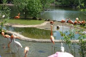 Пруд с фламинго