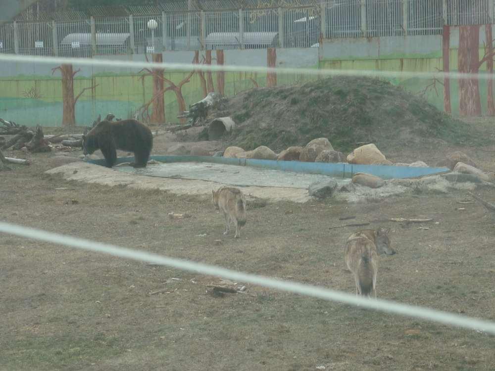 yaroslavl-zoopark1