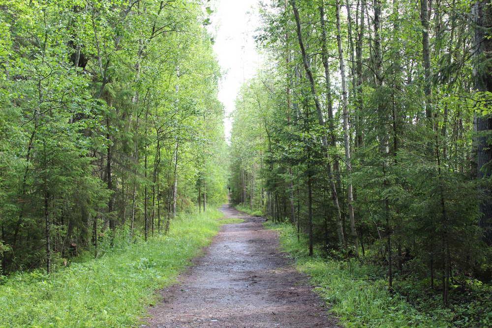 Дорога по лесу к Беломорским петроглифам