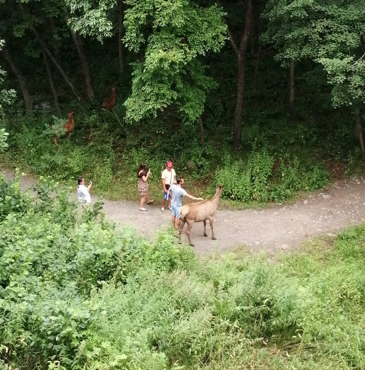 Сафари-парк в Шкотово
